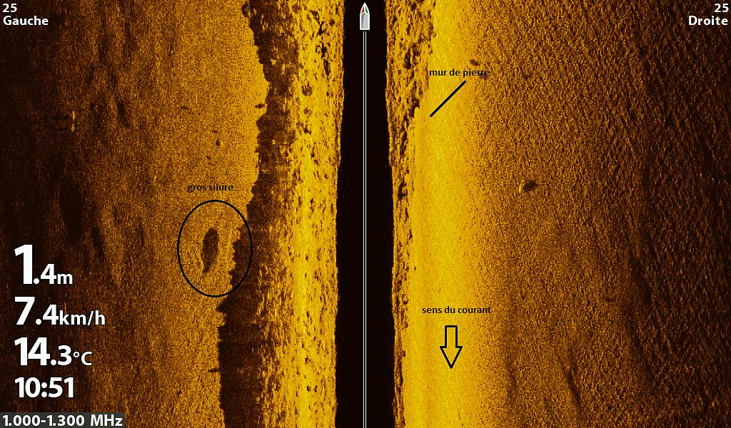 Un gros silure embusqué près d'un mur de pierre